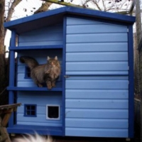 blue-boo-rolys-new-house-002_816x768_510x480
