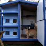 blue-boo-rolys-new-house-007_529x480