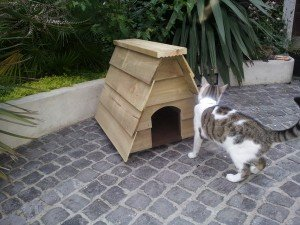 RUSTIC SWISS CATHOUSE